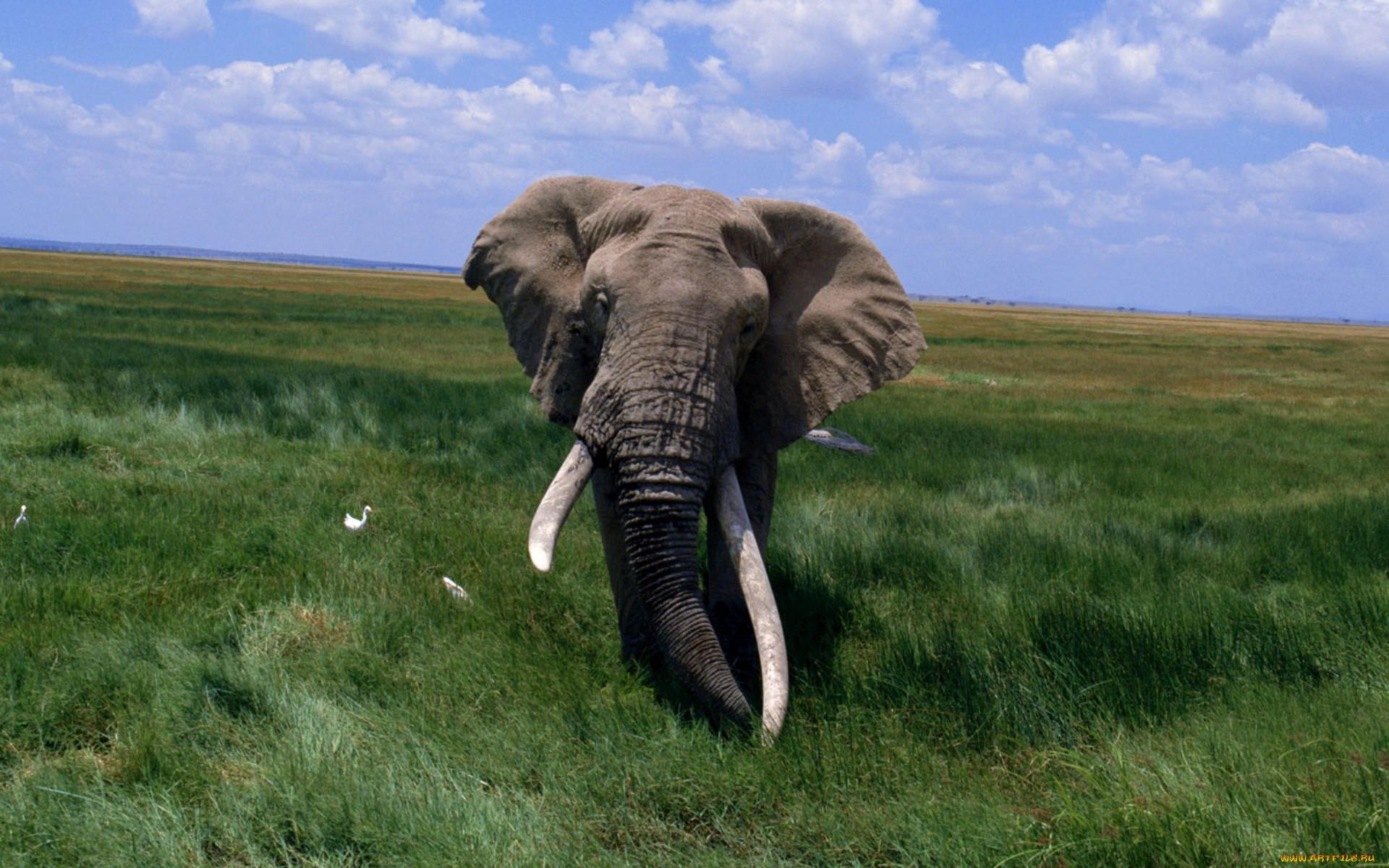картинка самого большого животного изменился течением